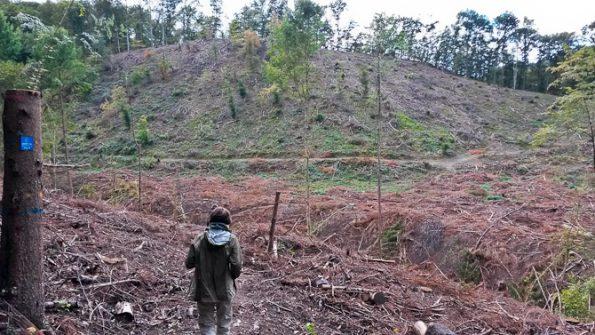 Wald abgeholzt, Symbolbild
