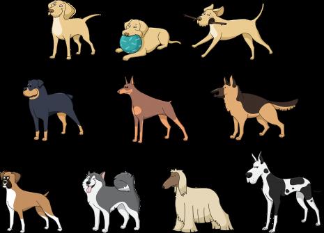 Hunderassen als Symbol für Identitäten und Rasseideologie